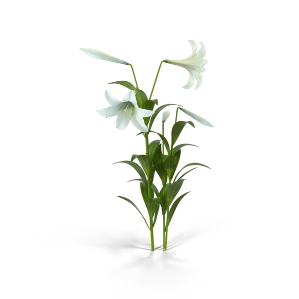 Easter Lily Object