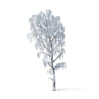 Winter Tree Object