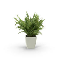 Potted Fern Object