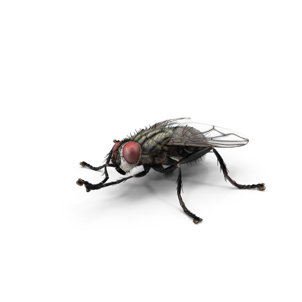 House Fly Object
