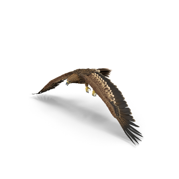 Imperial Eagle Flapping Object
