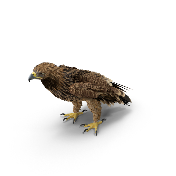 Imperial Eagle Standing Object