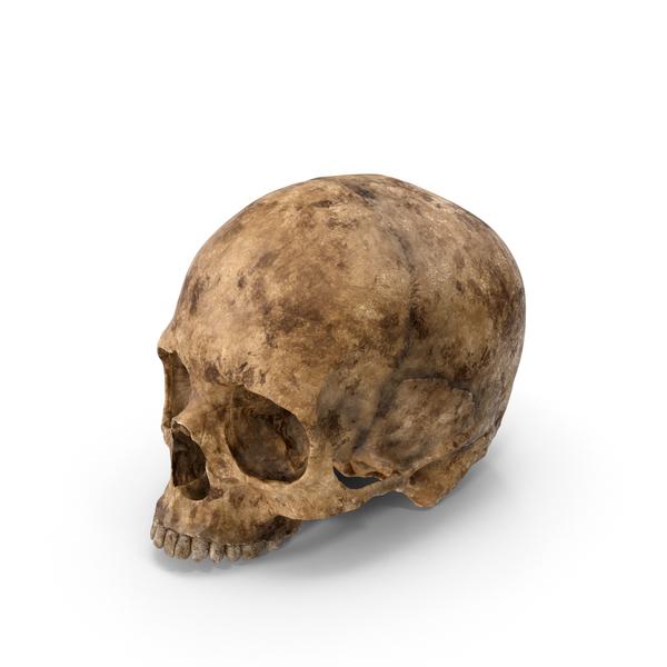 Skull Dirty Object