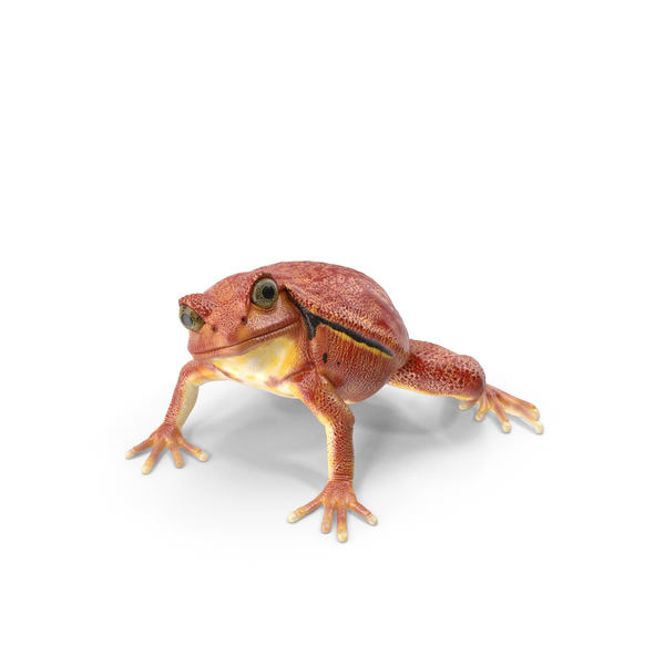 Tomato Frog Object