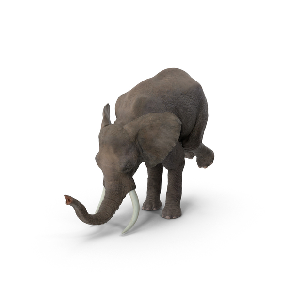 Elephant Circus Trick Object