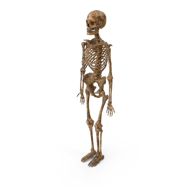 Dirty Skeleton Object