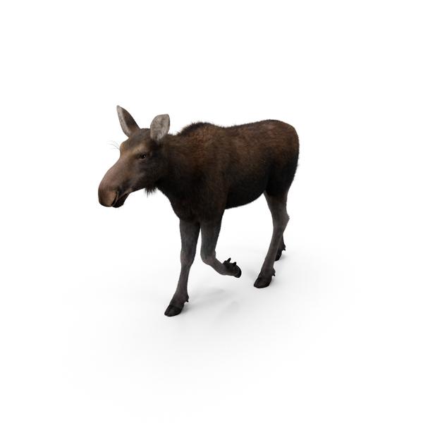 Moose Object