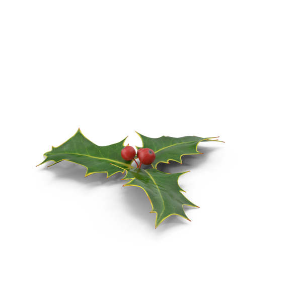 Holly Object